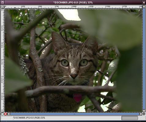 image-channel-paste.jpg