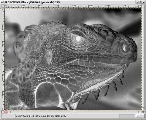 image-black-481x397.jpg